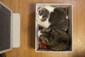 パネルヒーターが好きな猫たち