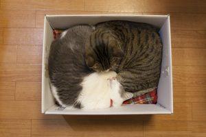 箱が好きな猫たち
