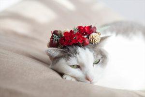 花冠をかぶる猫