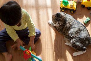 息子と遊ぶ猫