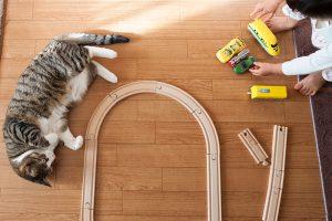 子供と猫が一緒に遊ぶ