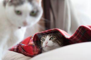 毛布に入る猫