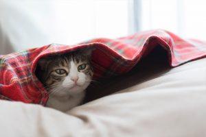 冬の猫の様子