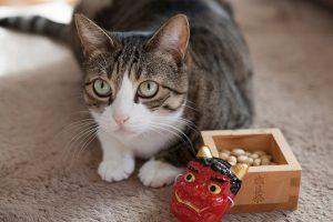 豆まき(猫)