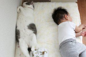 一緒に眠る子供と猫