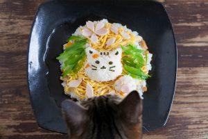 猫の雛祭り(ちらし寿司)