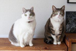 猫のお雛様(ヨシオとタマコ)