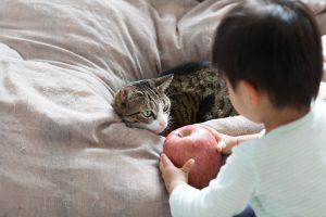 人間の子供と猫の行動は似ている?