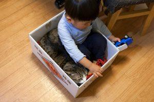 一緒に箱に入って遊ぶ(猫と子供)