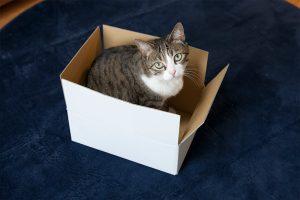 猫は箱が好き