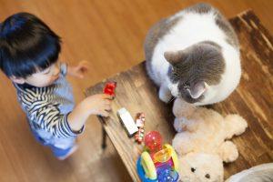 息子のおもちゃと猫