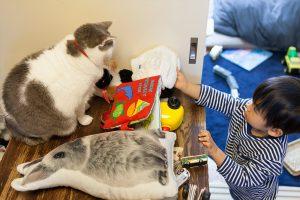 息子のおもちゃに囲まれる猫