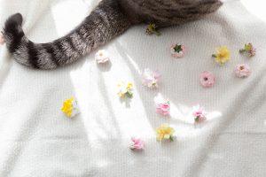 猫の尻尾と花