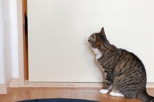 猫は引き戸を開けるのが上手