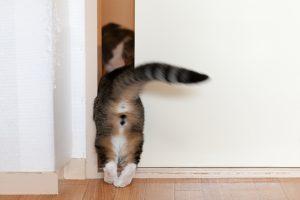 自由に部屋を出入りする猫