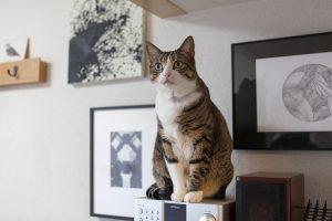 ウォールアートと猫