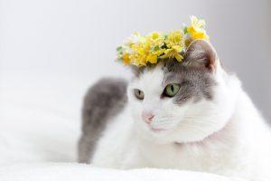 黄色い花冠をつける猫