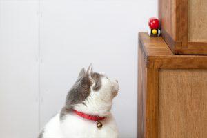 おもちゃが気になる猫