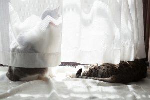 夏毛に生え変わる(猫)
