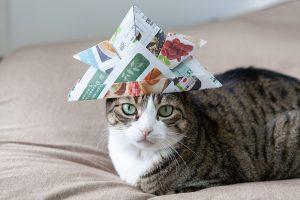 兜をかぶる猫