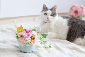 母の日プレゼントと猫