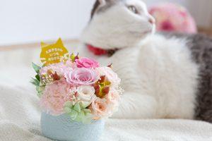 猫のお母さんへ花をプレゼントする