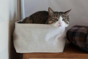 箱の中で嫉妬する猫