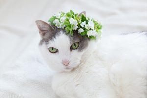 すずらんの花冠と猫