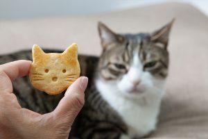 猫と猫型クッキー