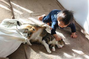 猫と赤ちゃん(よしお)