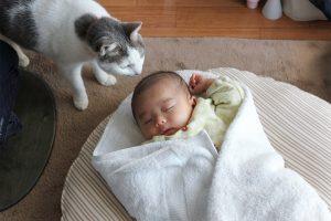猫と赤ちゃん(たま子)
