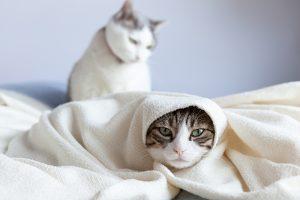 タオルケットでテルテル坊主(猫)