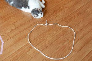 猫転送装置……うまくいかない