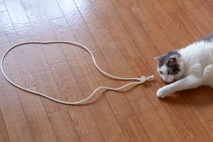 猫転送装置……失敗