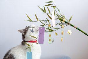 七夕飾りと猫
