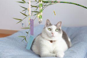 願い事をする猫