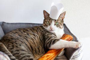 パン屋さんごっこ(猫)