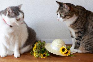 ひまわりと猫