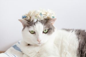 貝殻の花冠をつける猫