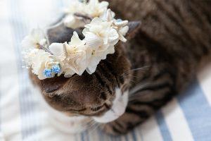 海をイメージした花冠をつける猫