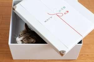 お中元の箱から出てくる猫