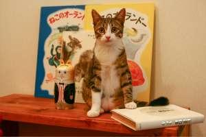 少年の頃(若々しい猫)