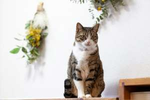 現在の姿(還暦を過ぎた猫)