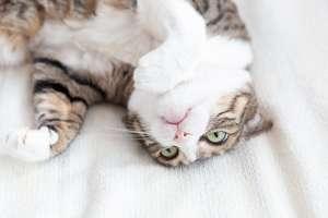 暑さでのびる猫