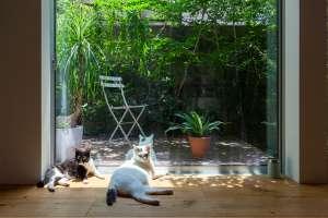 友人宅の猫たち