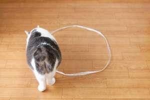 猫転送装置 その2