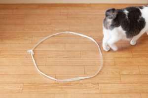 猫転送装置(ビニール紐の場合)