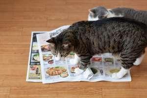 猫転送装置はチラシが大人気!?