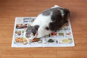 猫転送装置(結果-猫はチラシが好き)