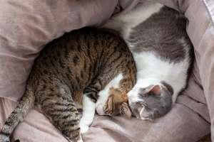 丸まって眠る猫たち